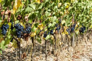 Ready to take a wine tour in Maryland?